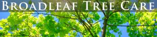 Broadleaf Tree Care Malvern