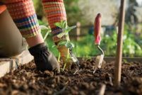 P and R Garden Services