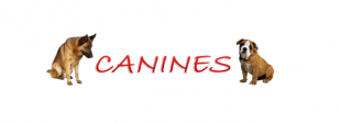 Canines Dog Behaviourist & Trainer